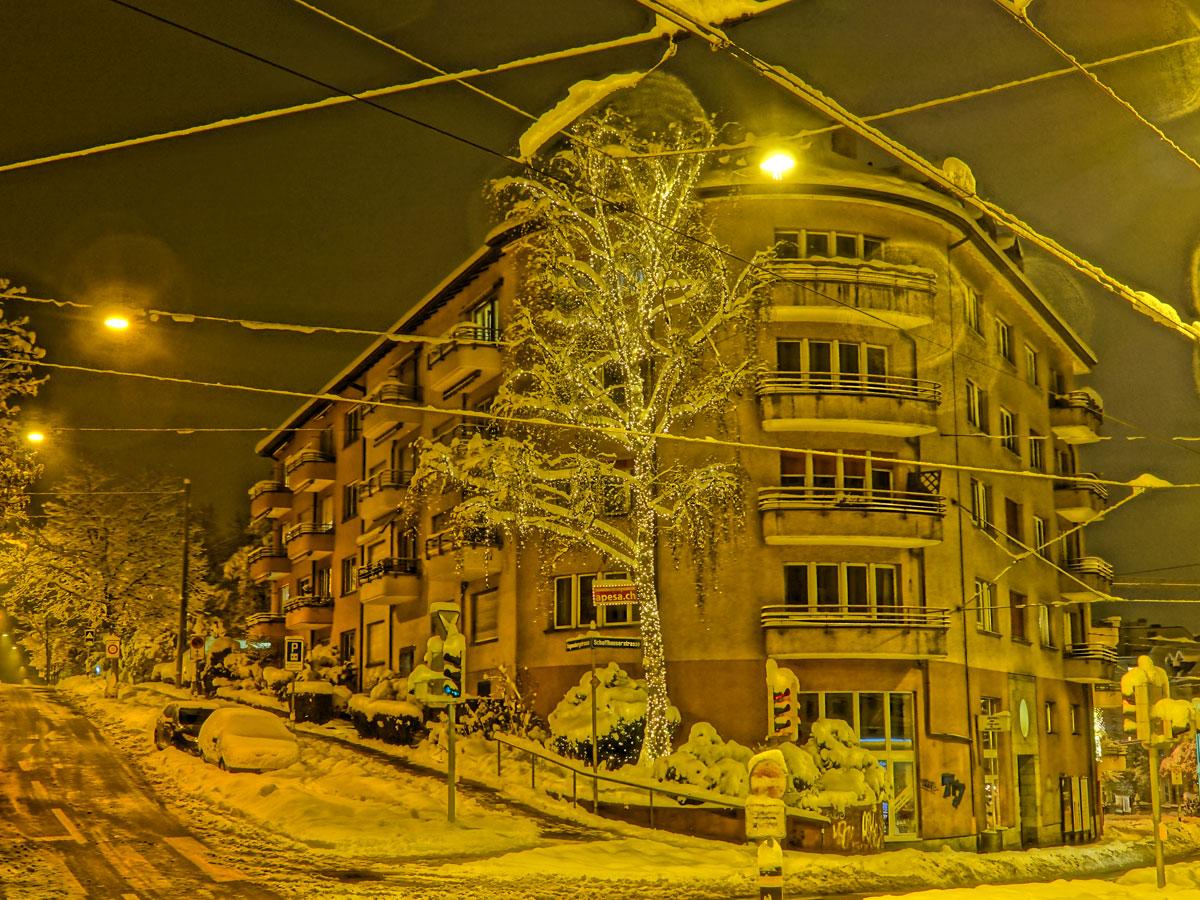So schön leuchtet die Birke im Winter
