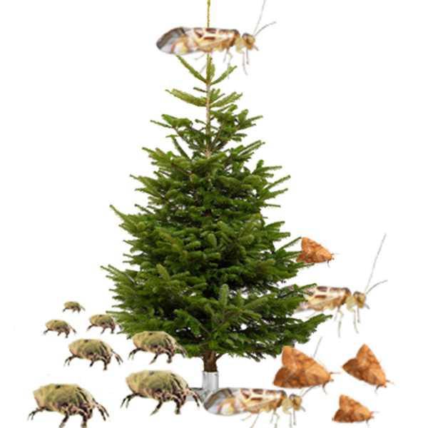 apesa-weihnachtsbeleuchtung-weihnachtsbau-tiere-ungeziefer_01