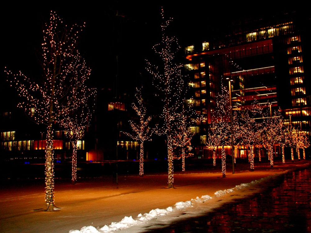 Beleuchtete Bäume sind eine Augenweide