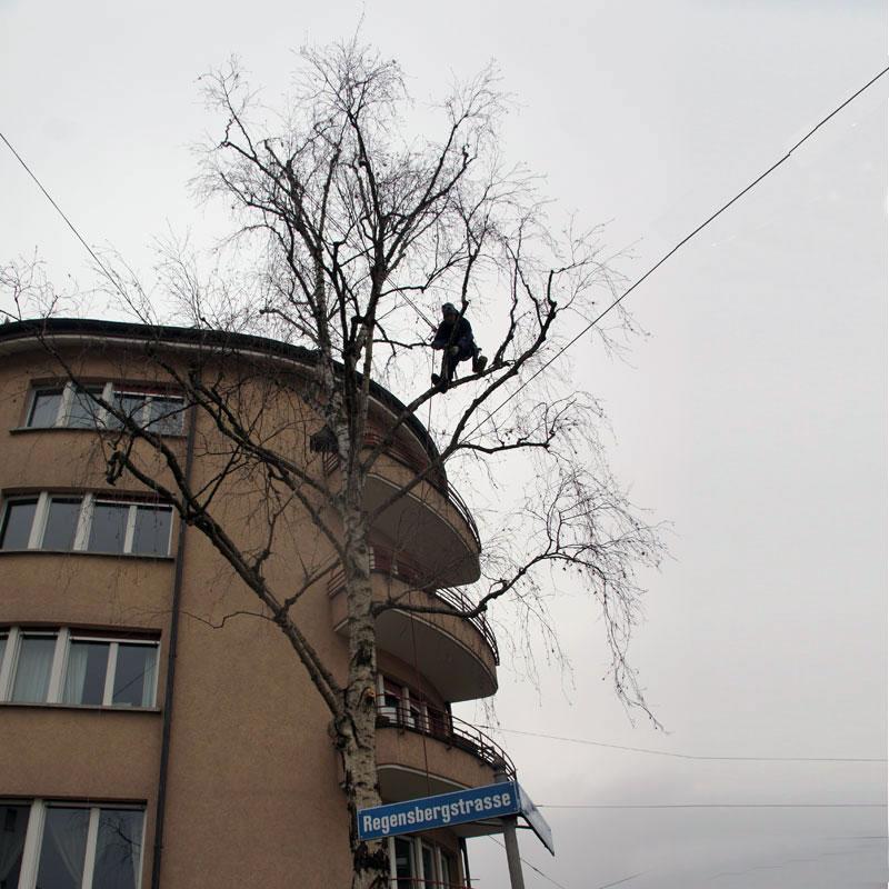 Soll-Zustand Leuchtbaum