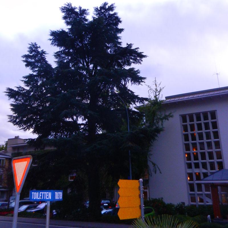 System Expo 24 Meter hohe Libanon Zeder