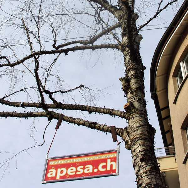 Schätzung für ein Birke 18 Meter hoch