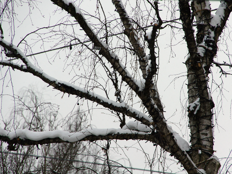 Leuchtbaum am Tag mit Schnee