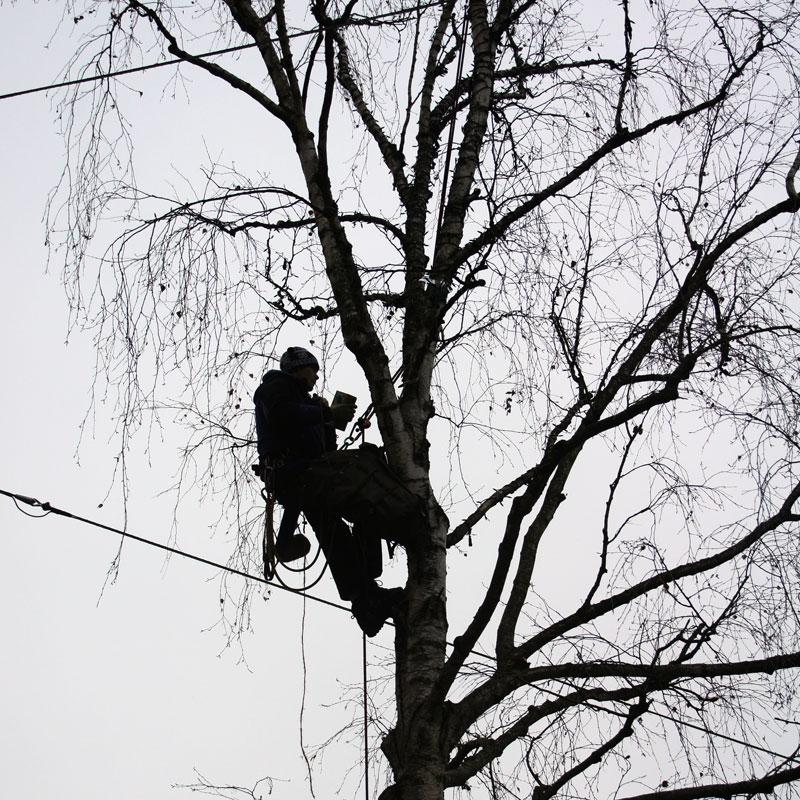 Beim Baumschnitt ist auch zu beachten