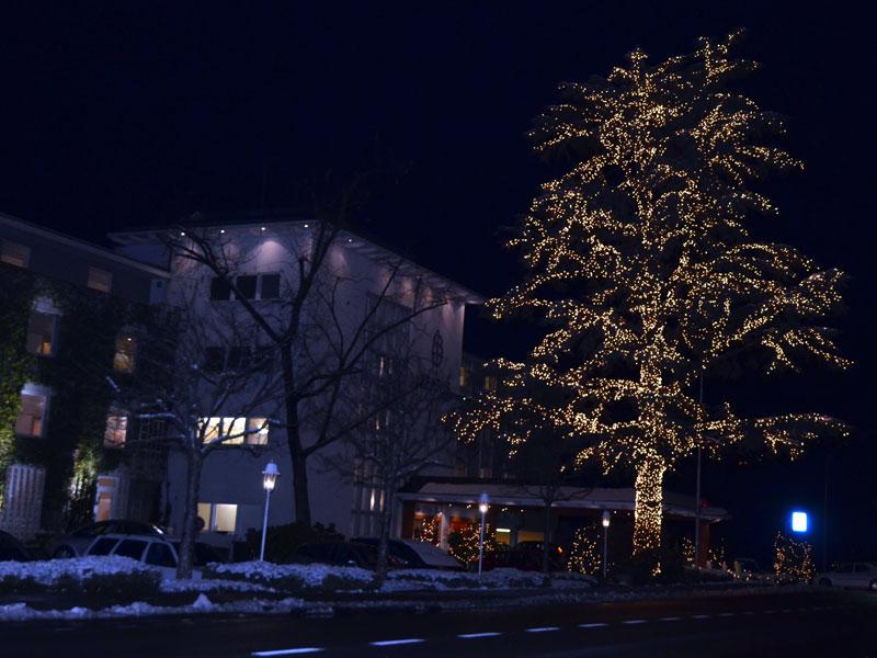 Baum in der Nacht mit Schnee